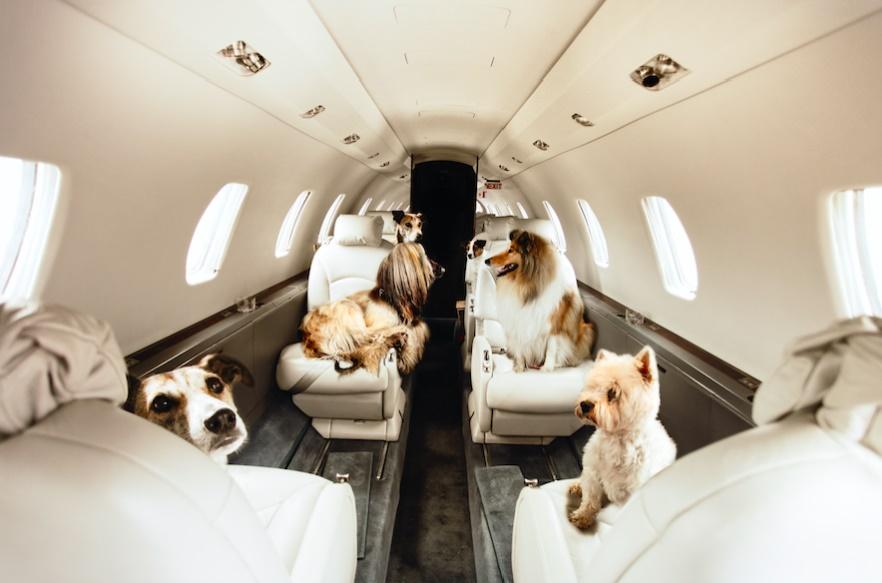 Джетикет: неожиданная турбулентность, или чего не стоит делать на борту частного самолета